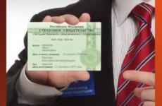 Страховой номер индивидуального лицевого счёта что это, процедура получения документа